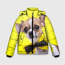 Куртка зимняя для мальчика Чихуахуа с бабочкой цвета 3D-черный — фото 1