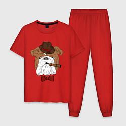Пижама хлопковая мужская Английский бульдог с сигарой цвета красный — фото 1