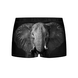 Трусы-боксеры мужские Взгляд слона цвета 3D — фото 1
